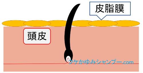 遊離脂肪酸の皮脂膜